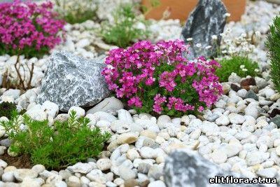 Цветы для альпийской горки купить украина купить искусственные розы красного цвета