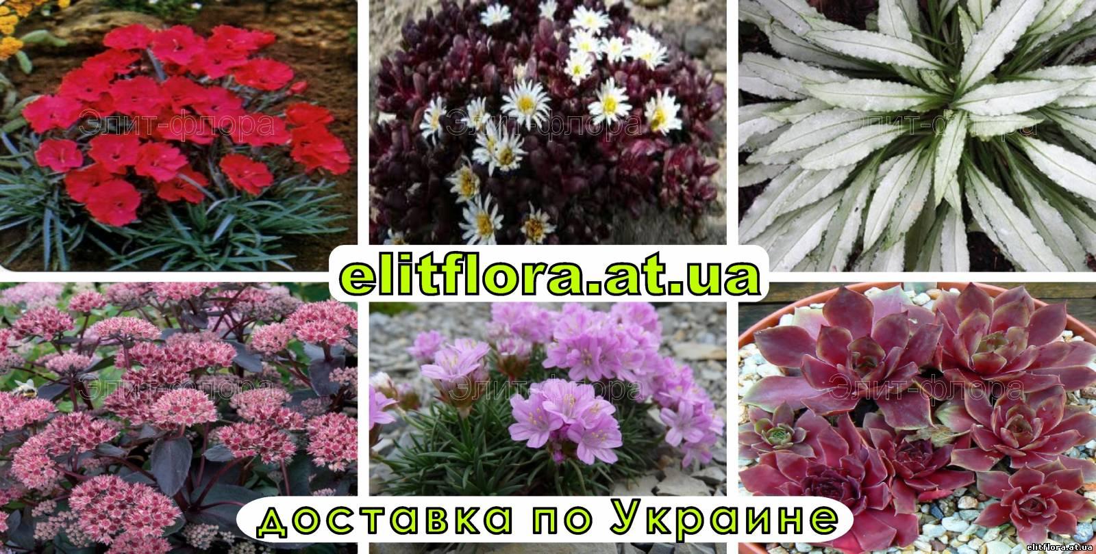 Цветы ярко красного цвета фото